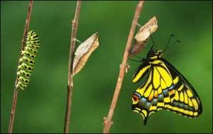 butterfly[1]