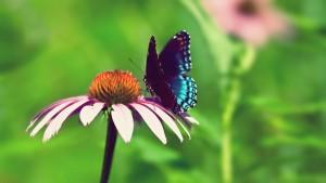 butterfly_flower_beautiful_flying_field_17728_3840x2160[2]