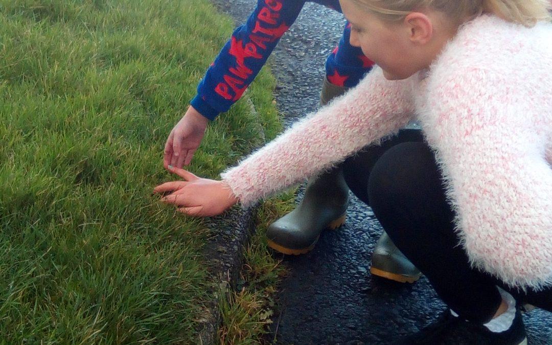Nurturing Nature Empathy